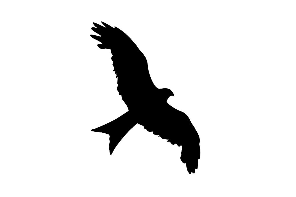 Rotmilan Flugbild