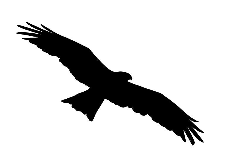 Schwarzmilan Flugbild