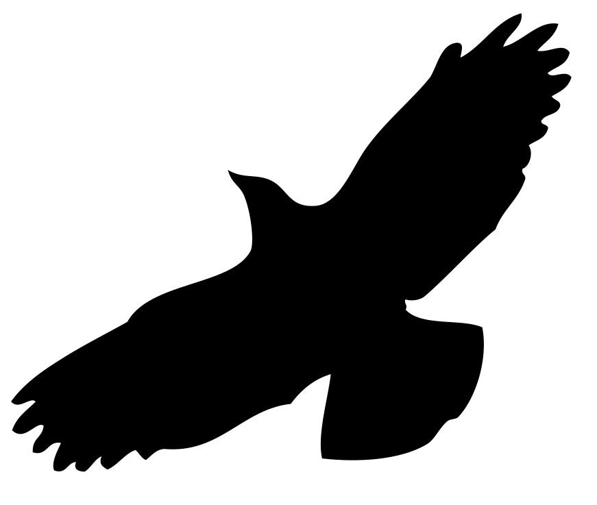 Flugbild Krähe