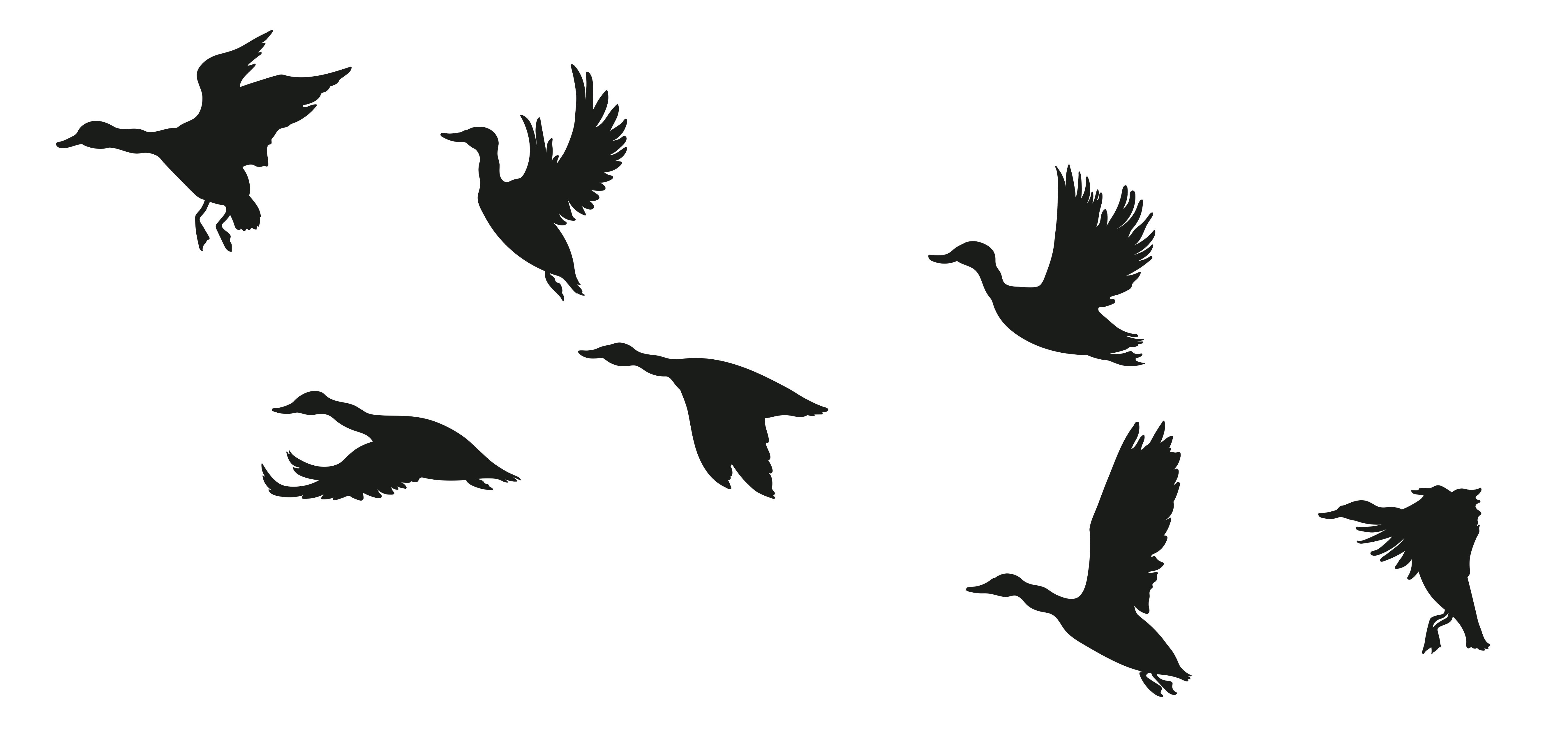 Flugbilder Ente