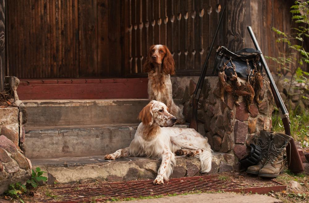 Hundehaltung cover