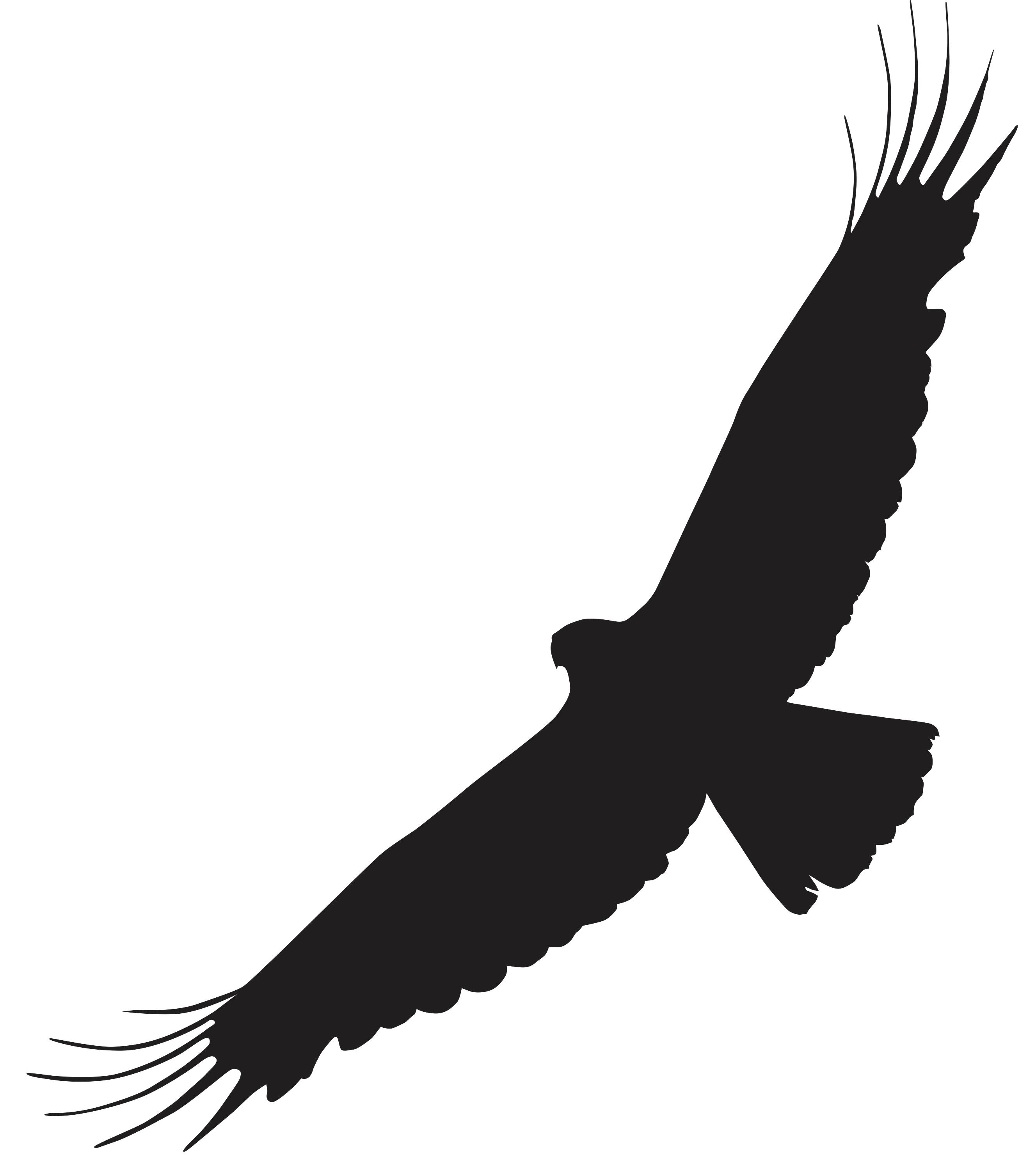 Flugbild von Adlern
