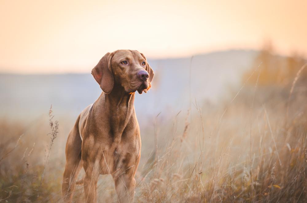 Grundlagen der Jagdhunde cover