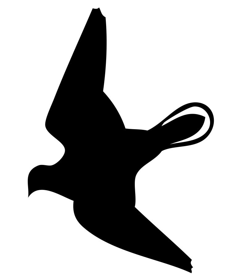 Flugbild der Taube