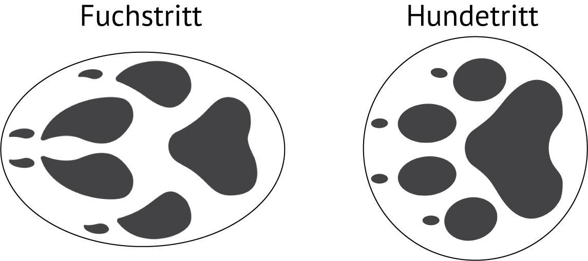 Vergleich von Fuchs- und Hundetritt