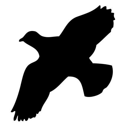 Flugbild Rebhuhn