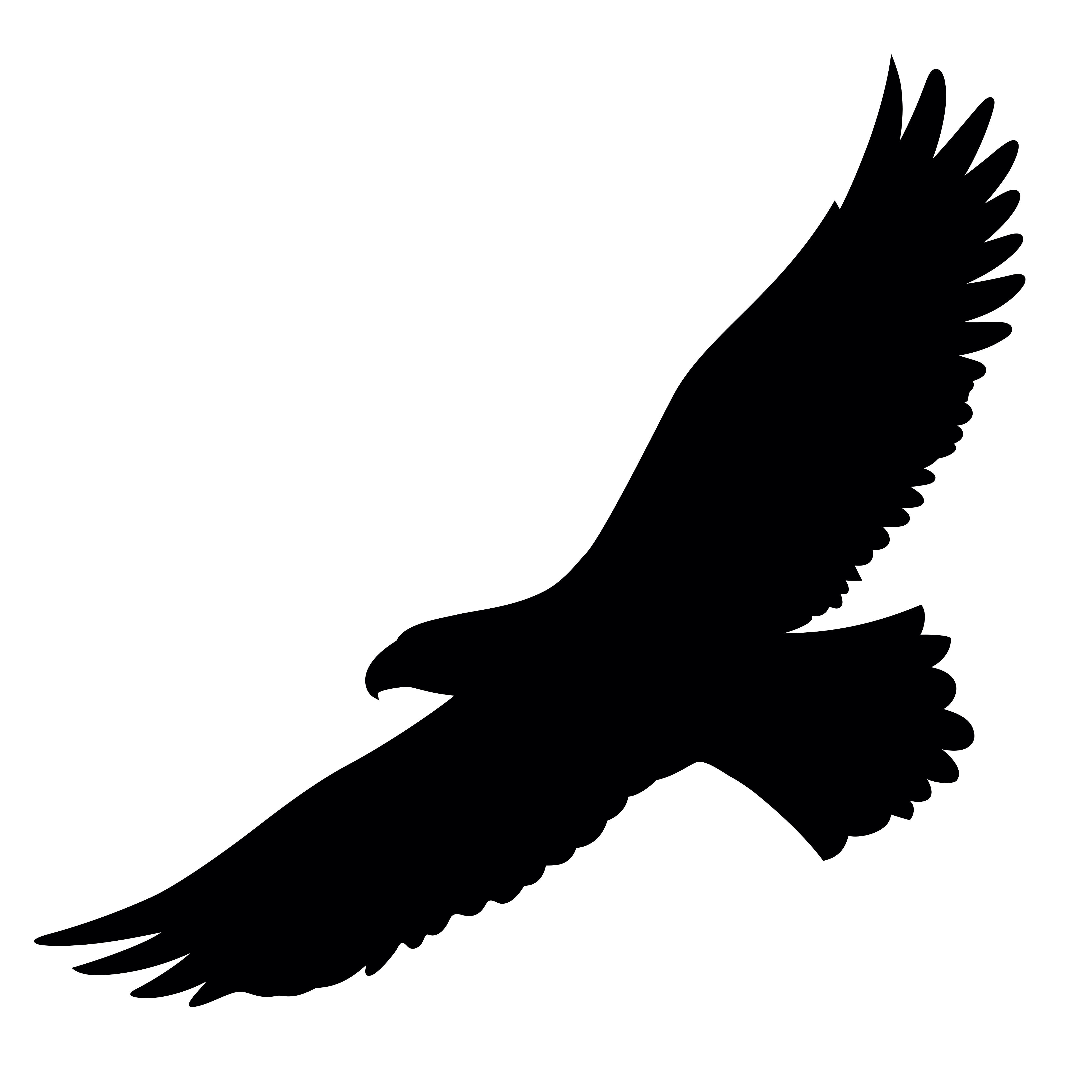 Seeadler Flugbild