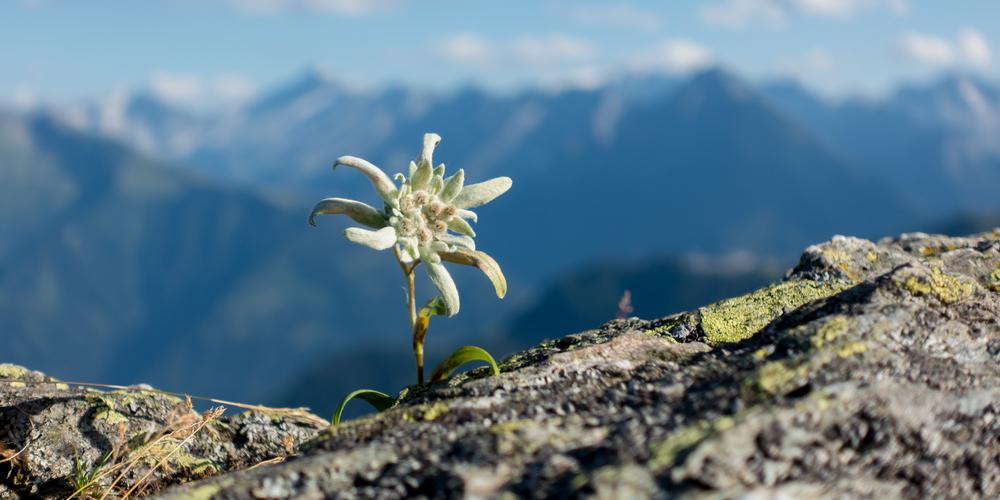 Naturschutz: Pflanzen cover