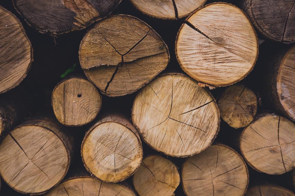 Waldwirtschaft cover