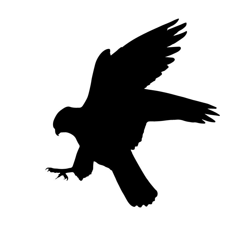 Unechte Falken Sturzflug