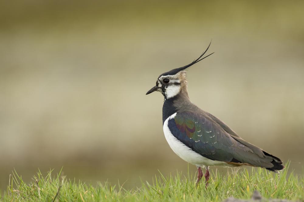 naturschutz: vögel