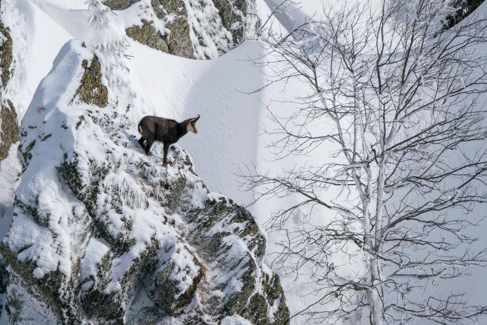 Alpiner Lebensraum des Gamswildes