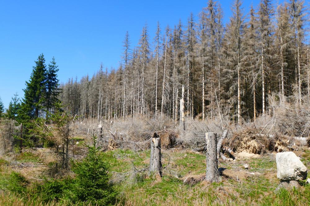 Waldschäden cover