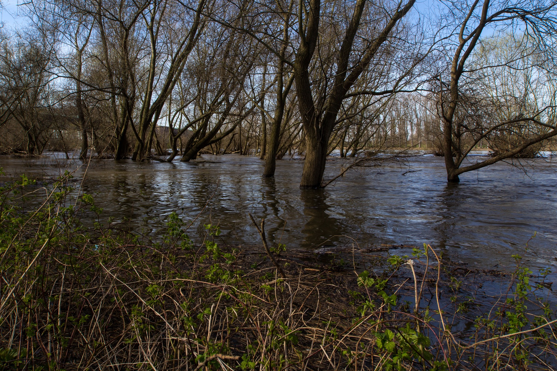 Geflutete Flussaue am Rhein