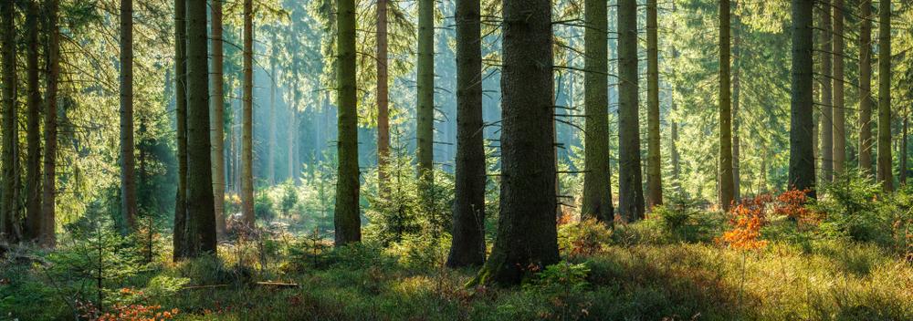 Waldbau cover